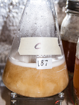 Fast stir speed: bubbles were constantly drawn into the starter giving it a milky appearance.  Initial wort weight: 256 g